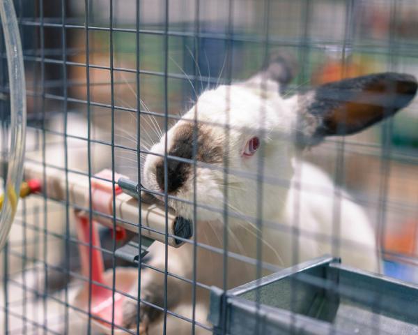 Краснодарский край: В Староминском районе откроют кролиководческую селекционную ферму