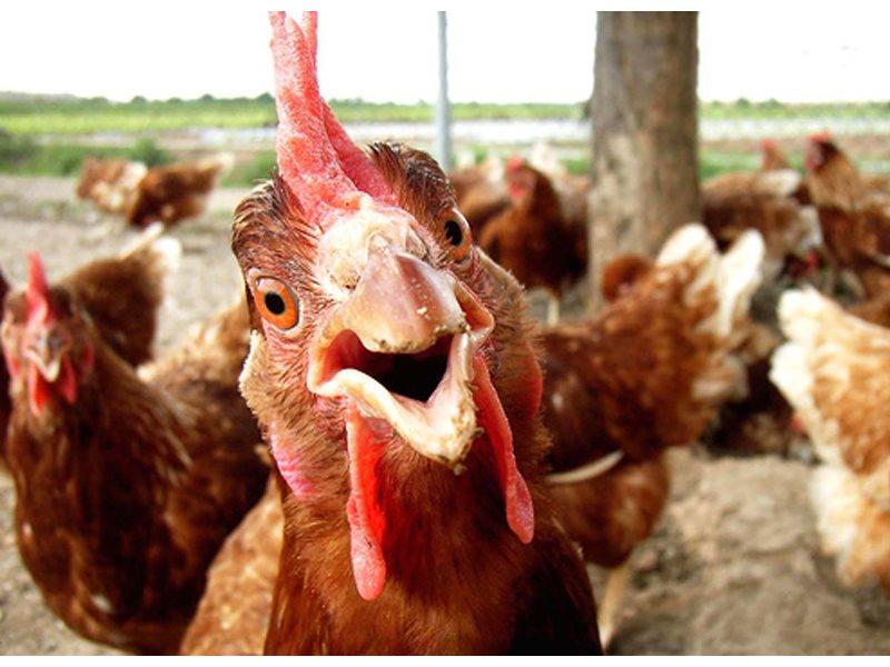 РФ за 7 месяцев сократила импорт мяса на 36,9%