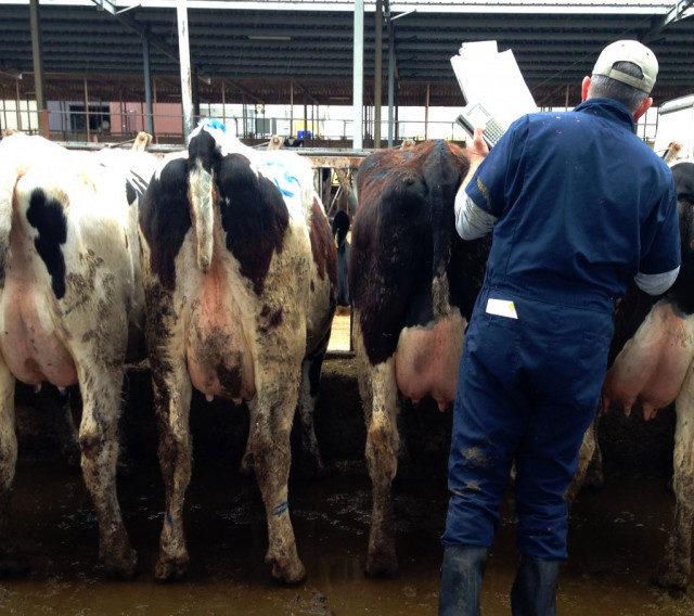 Нижегородская область: Производство мяса и молока увеличилось