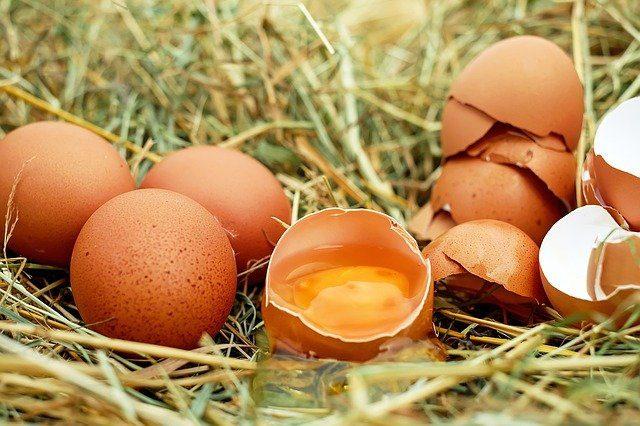 Производство яиц и молока снизилось в Ростовской области